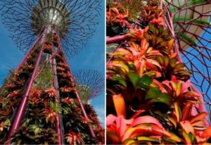 supertrees vegetal