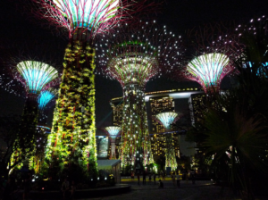 photo supertrees by night